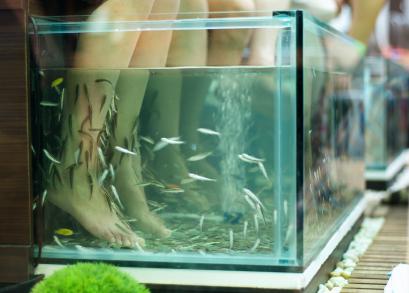 Achat aquarium g ant for Achat grand aquarium